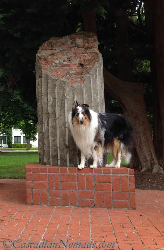 A harlequin blue merle rough collie with the Oregon state capitol column segments, Salem, Oregon