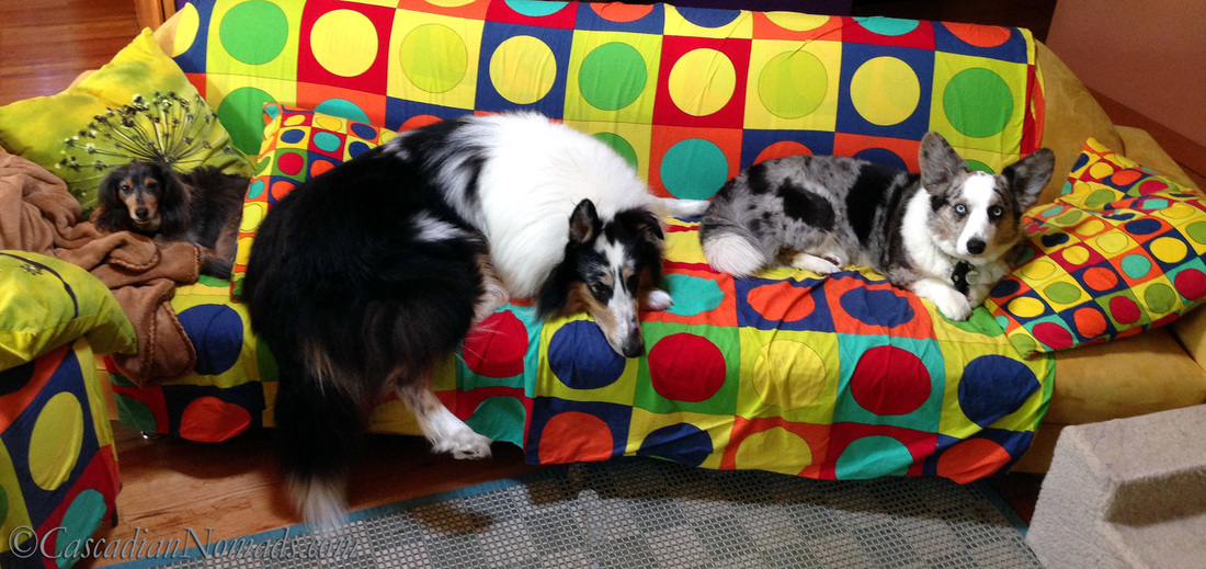 Who Are The Best Travel Buddies? Ask The World's Worst Roommates... Five Pets: Miniature dachshund Wilhelm, rough collie Huxley and cardigan welsh corgi exhibit proof of their couch hog dog ways.