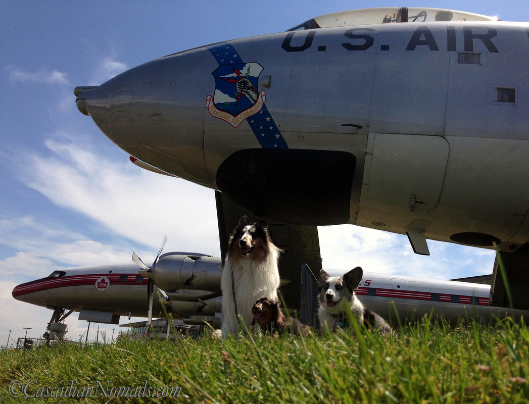 Rough collie, Miniature dachshund and Cardigan Welsh Corgi dogs with two airplanes on display at The Museum of Flight, Seattle, Washington, Cascadia.
