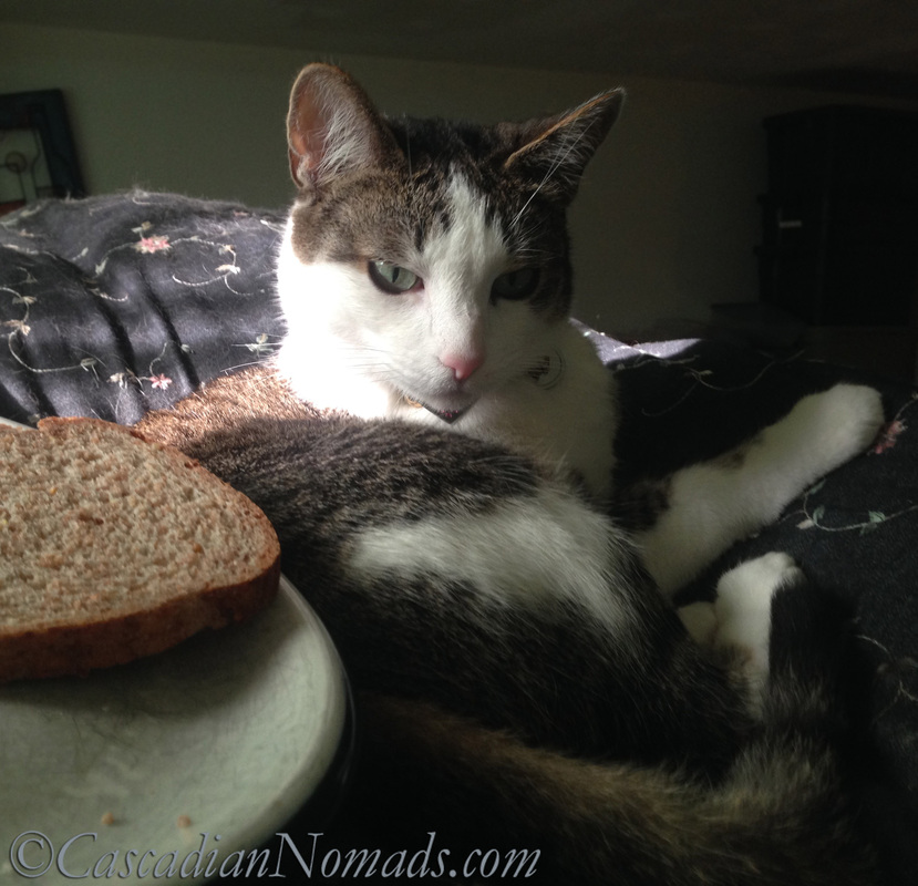 What happens when a cat writes a toast? Bad Poetry!