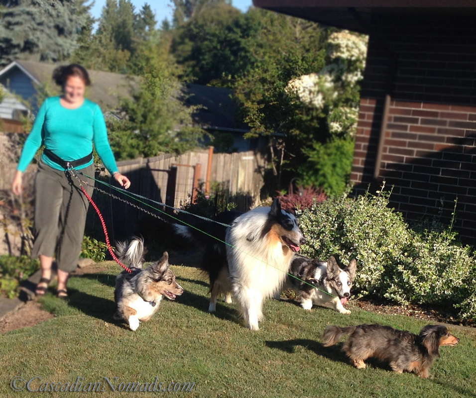 Walking Four Dogs: Awesome #MultiPetMania Moments Made Possible By The Umbilical Belt Hands Free Dog Leash