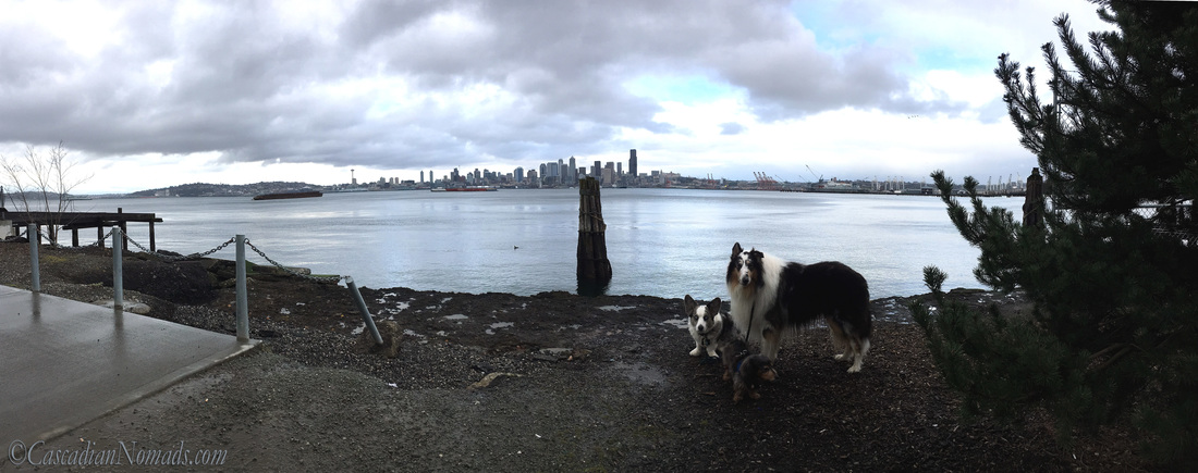 City of Seattle skyline across Elliot Bay with three adventurous Pacific Northwest dogs, Cardigan Welsh corgi, Brychwyn, miniature long haired dachshund, Wilhelm, and rough collie dog, Huxley. #DogwoodWeek8 #Dogwood52