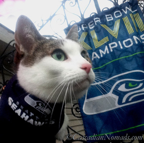 Cat Amelia's Seattle Seahwaks Super Bowl Champion banner selfie side.