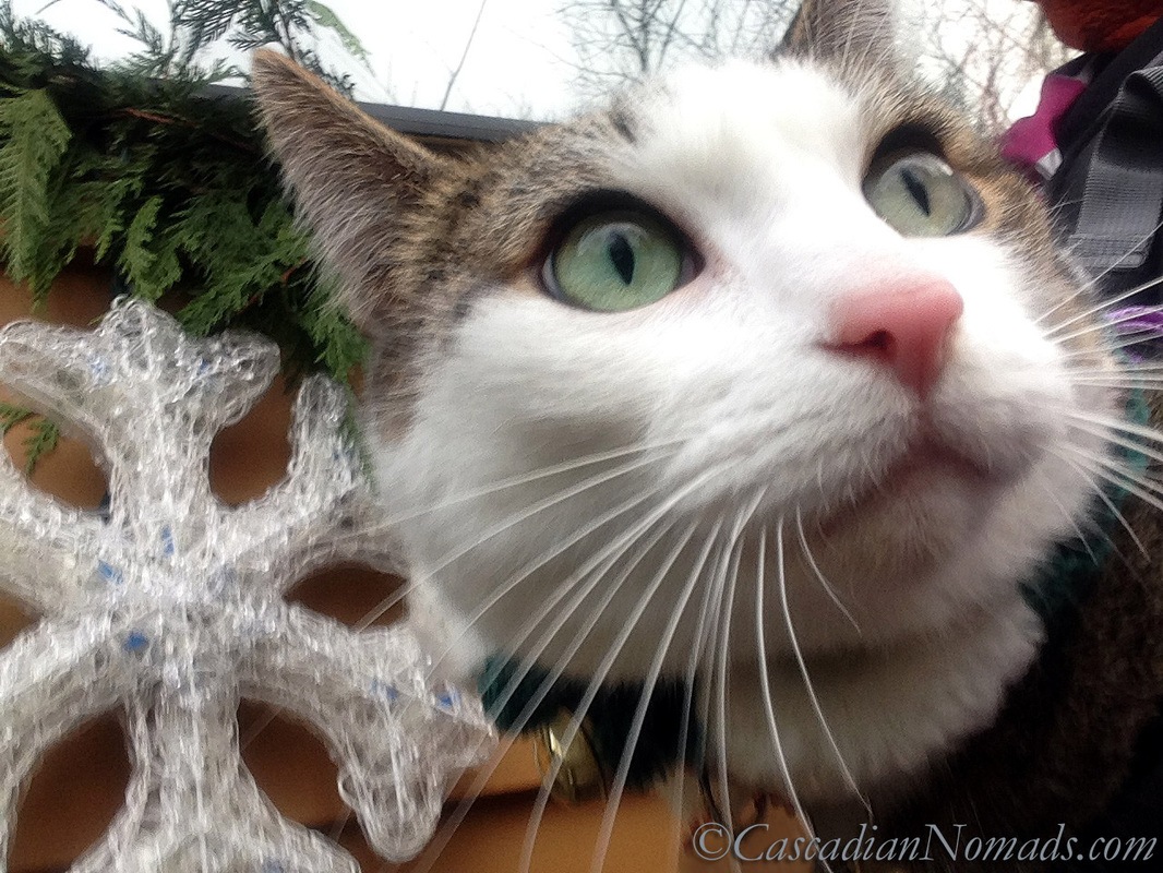 Cat Selfie of Amelia with a very large snowflake