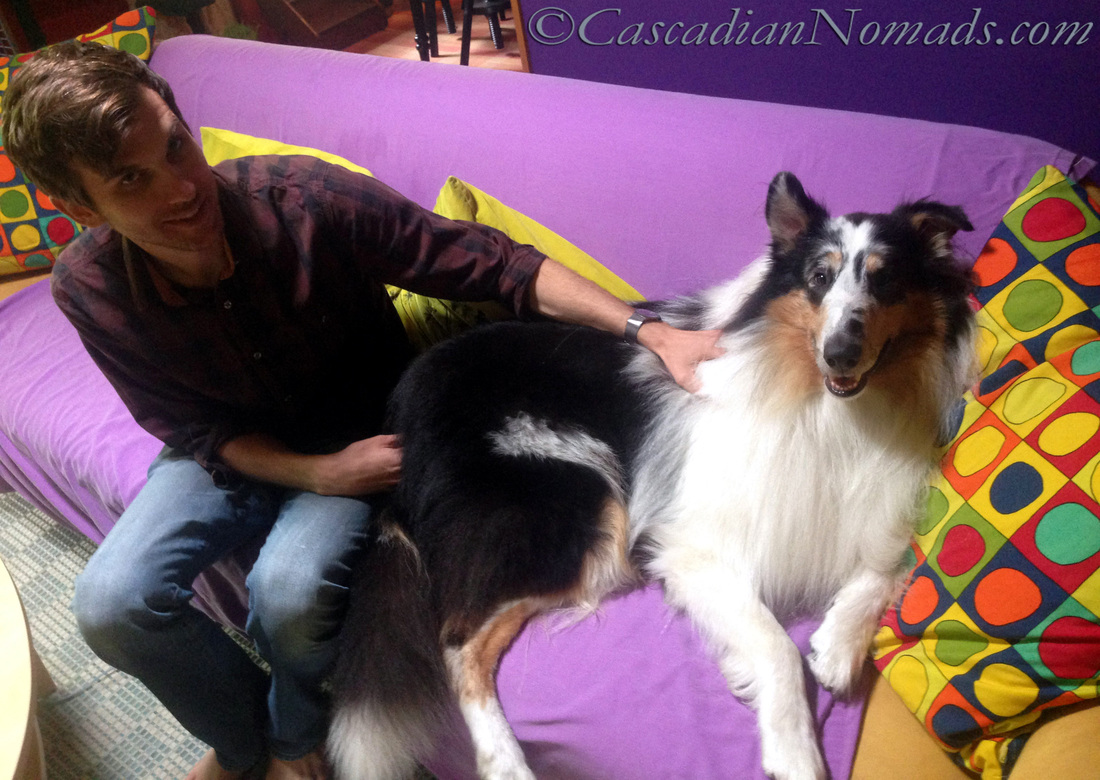 Seattle Collie Dog's Stress Free Wellness Exam from VetPronto.com, Mobile Veterinary Services