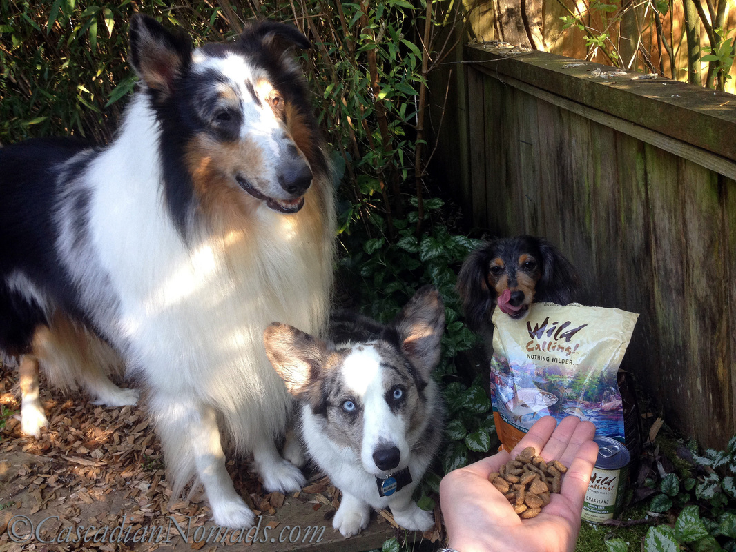 Three dogs checing out their Wild Calling! dry dog food of Whitefish Recipe #TheArtofNutrition