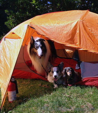C&ground fire safety with dogs Dogs love tents but tents are flamable. Always have & Traveling Pet Fire Safety - Cascadian Nomads