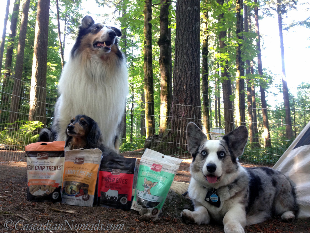 Rough collie Huxley, miniature dachshund Wilhelm and Cardigan Welsh corgi Brychwyn camping with the Merrick picnic pack of dog treats.