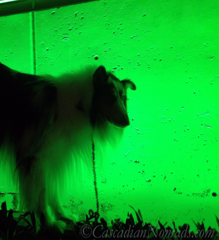 Rough collie dog silhouette in green, Counterbalance Park, Seattle