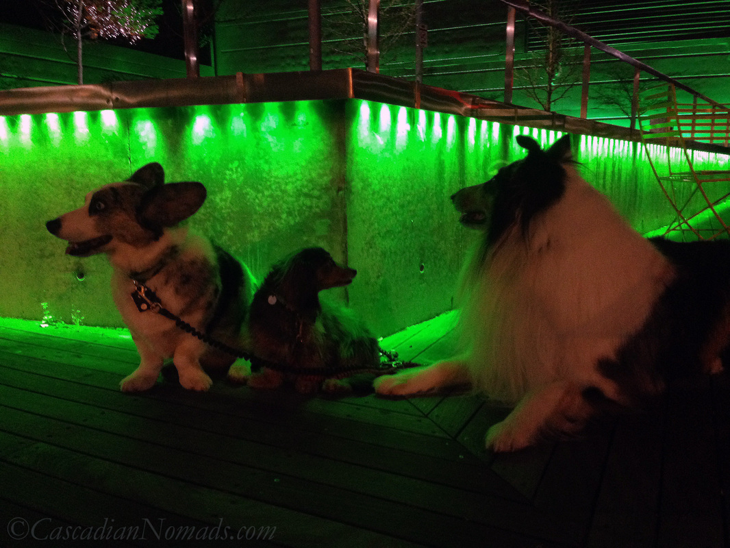 Three dogs admiring the green lights at Seattle's Counterbalance Park