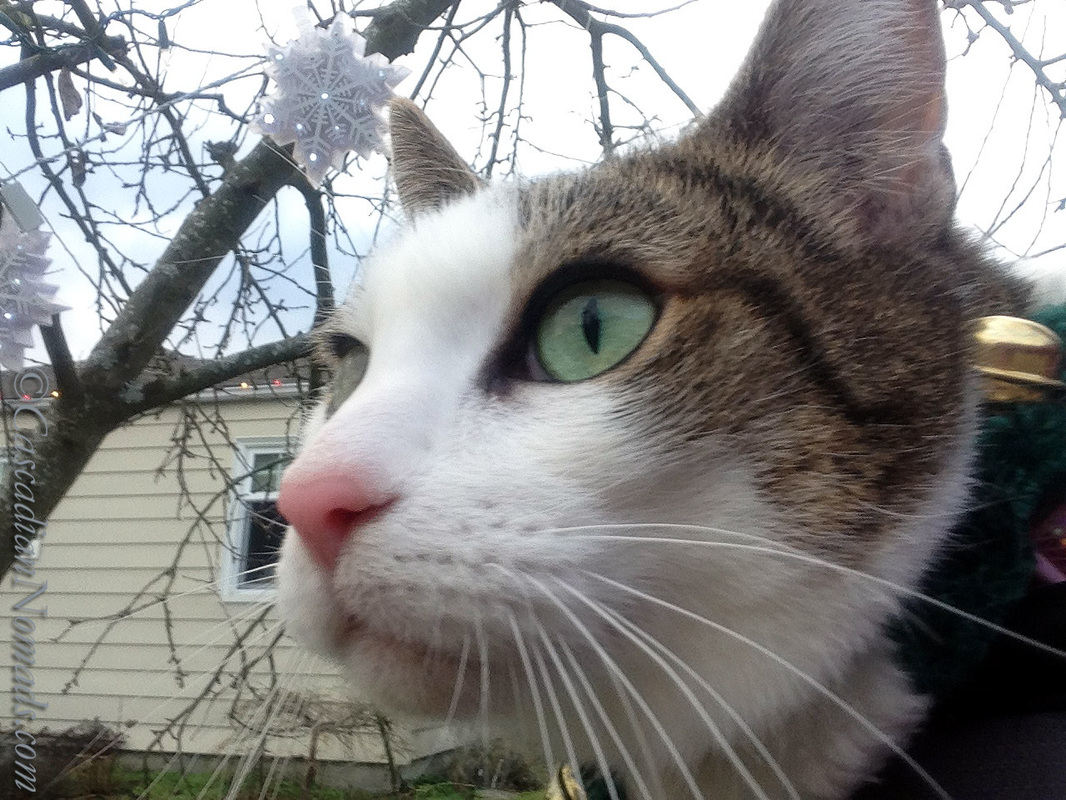 Cat Selfie of Amelia with a snowflakes in a tree