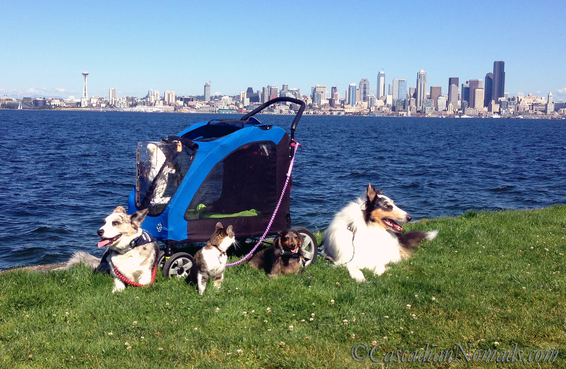 Who Are The Best Travel Buddies? Ask The World's Worst Roommates... Five Pets: Traveling pets cardigan welsh corgi Brychwyn, abyssinian tabby cat Amelia, miniature dachshund Wilhelm, rough collie Huxley and triton cockatoo Leo (in stroller) pose with the famous Seattle skyline.