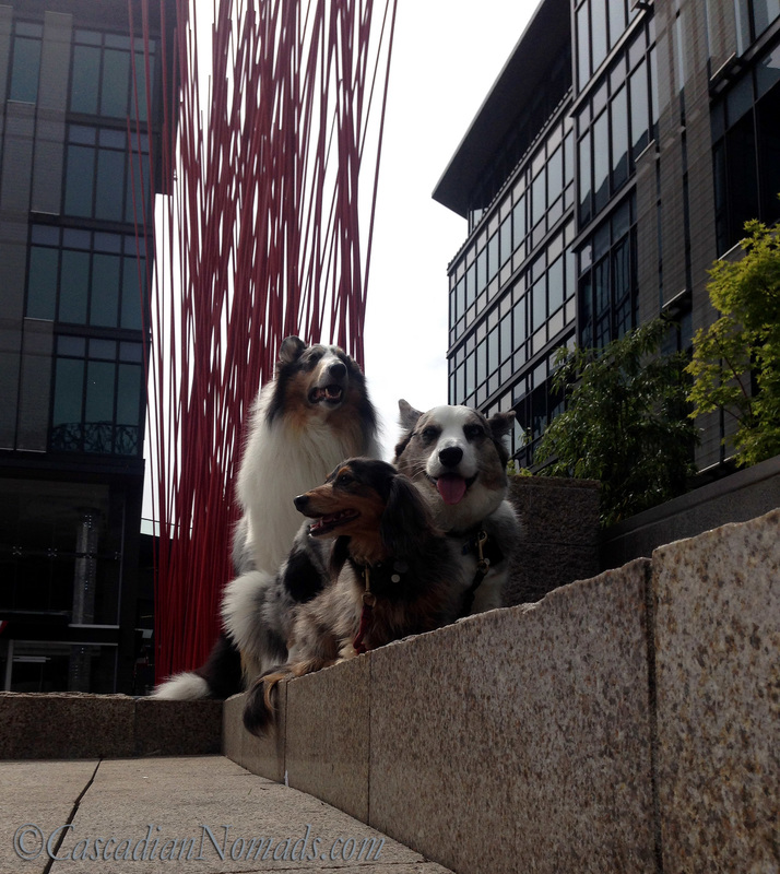 Looking up at Rough collie Huxley, Cardigan Welsh Corgi Brychwyn and miniature dachshund Wilhelm with Red Stix by Konstantin Dimopoulos at Home Plate Center, Seattle, Washington, Cascadia