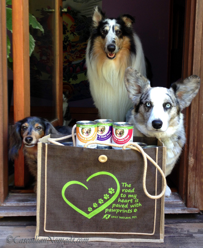 Three traveling dogs all packed and ready to go with healthy #PawNatural PowerStew from Only Natural Pet