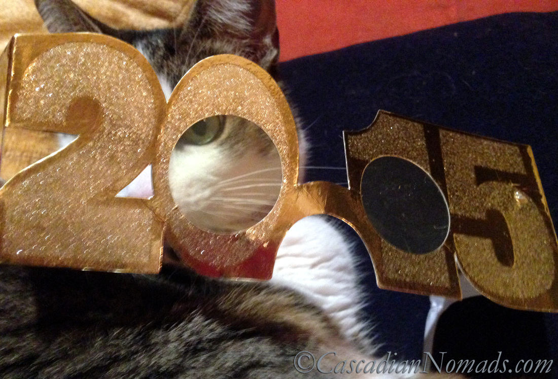Cat Amelia poses for a silly photo peering through 2015 glasses