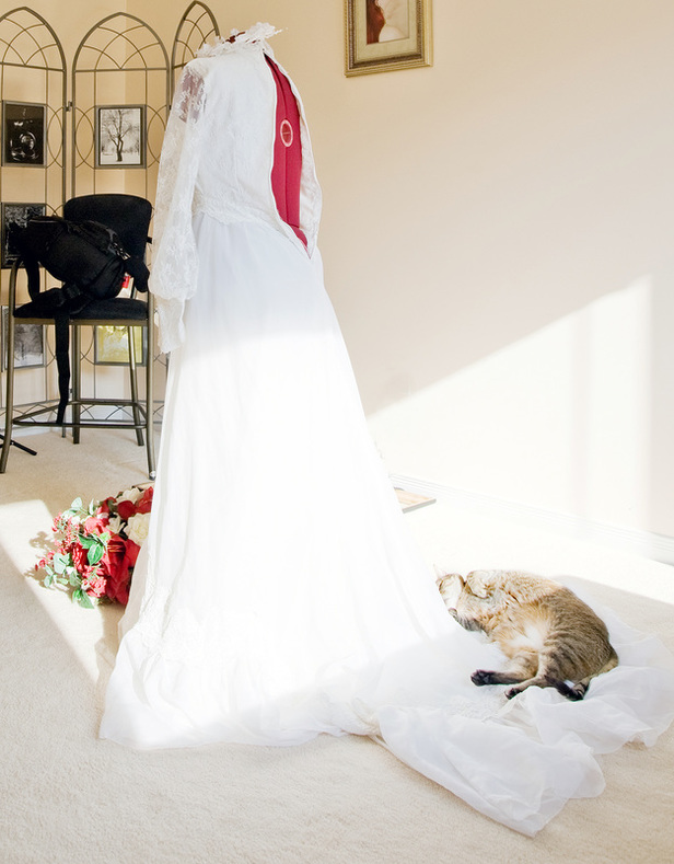 #mysunnyday: A cat naps on a bridal gown train in a sun puddle.