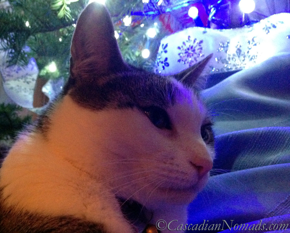 Cat Selfie of Amelia with snowflakes under the tree