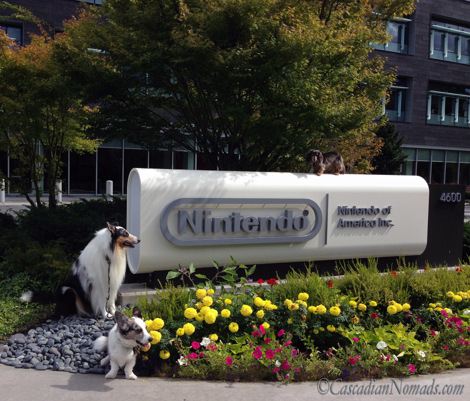Dogs at Nintendo of America, Inc: Rough collie Huxley, Cardigan Welsh corgi Brychwyn and miniature dachshund Wilhelm pose for a photo with the enterance sign, Redmond, Washington