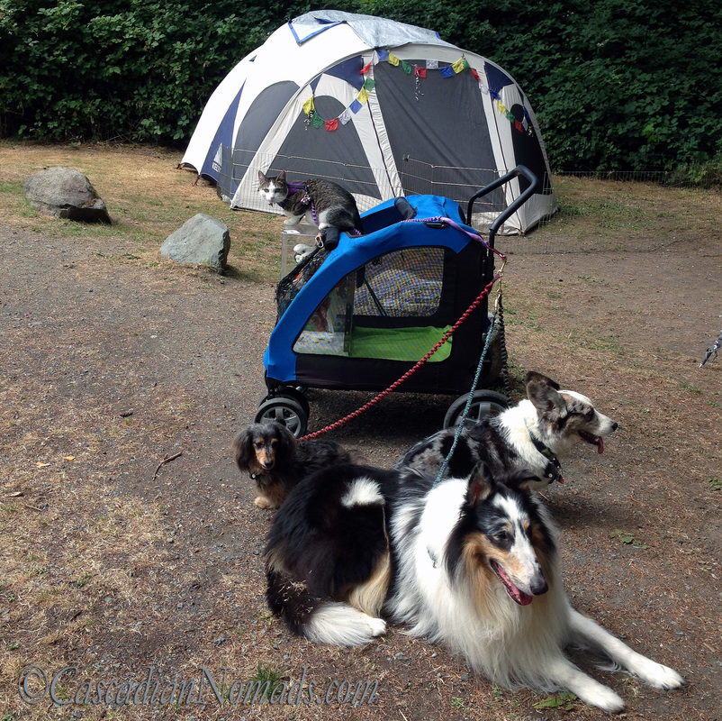 The five traveling pets of the Cascadian Nomads, cat Amelia, cockatoo Leo, dachshund Wilhelm, corgi Brychwyn, rough collie Huxley, and their old tent.