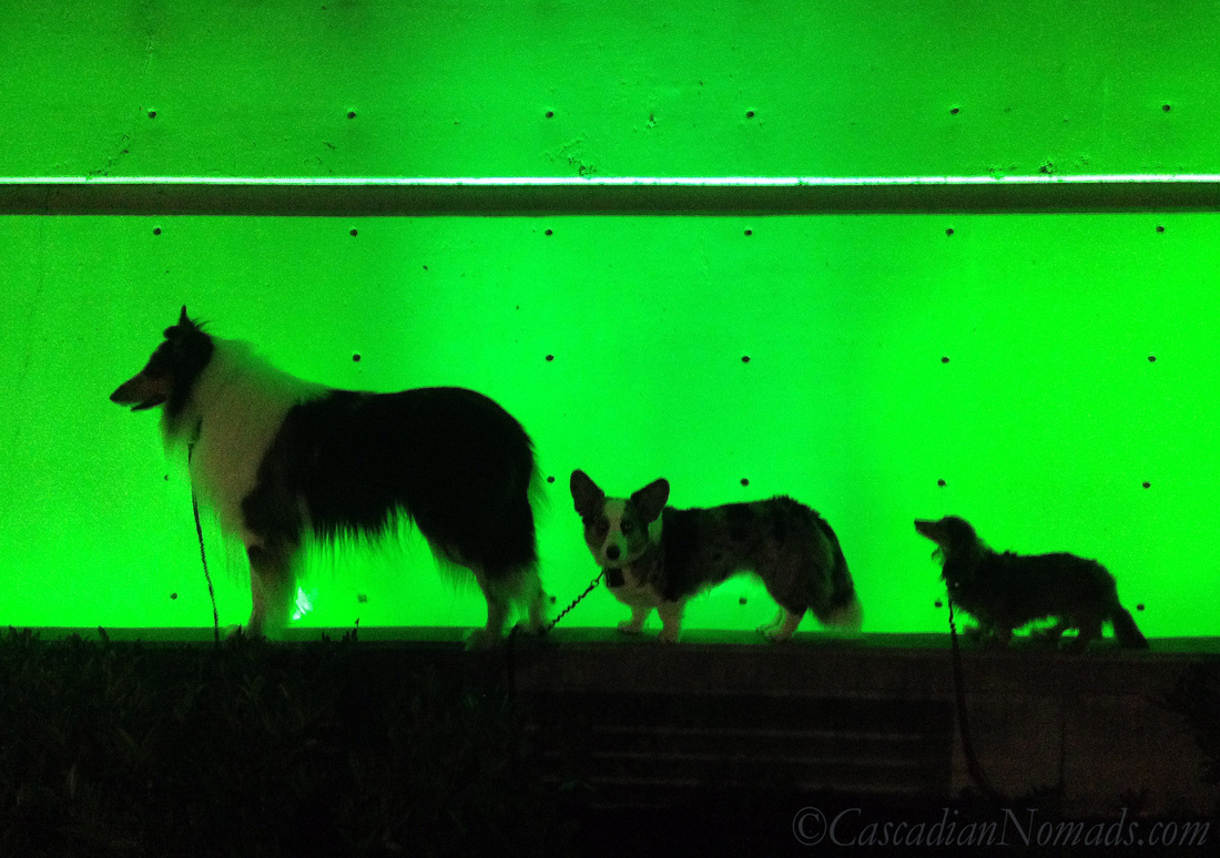 Rough collie, Cardigan Welsh corgi and miniature dachshund dogs silhouetted in green, Counterbalance Park, Seattle