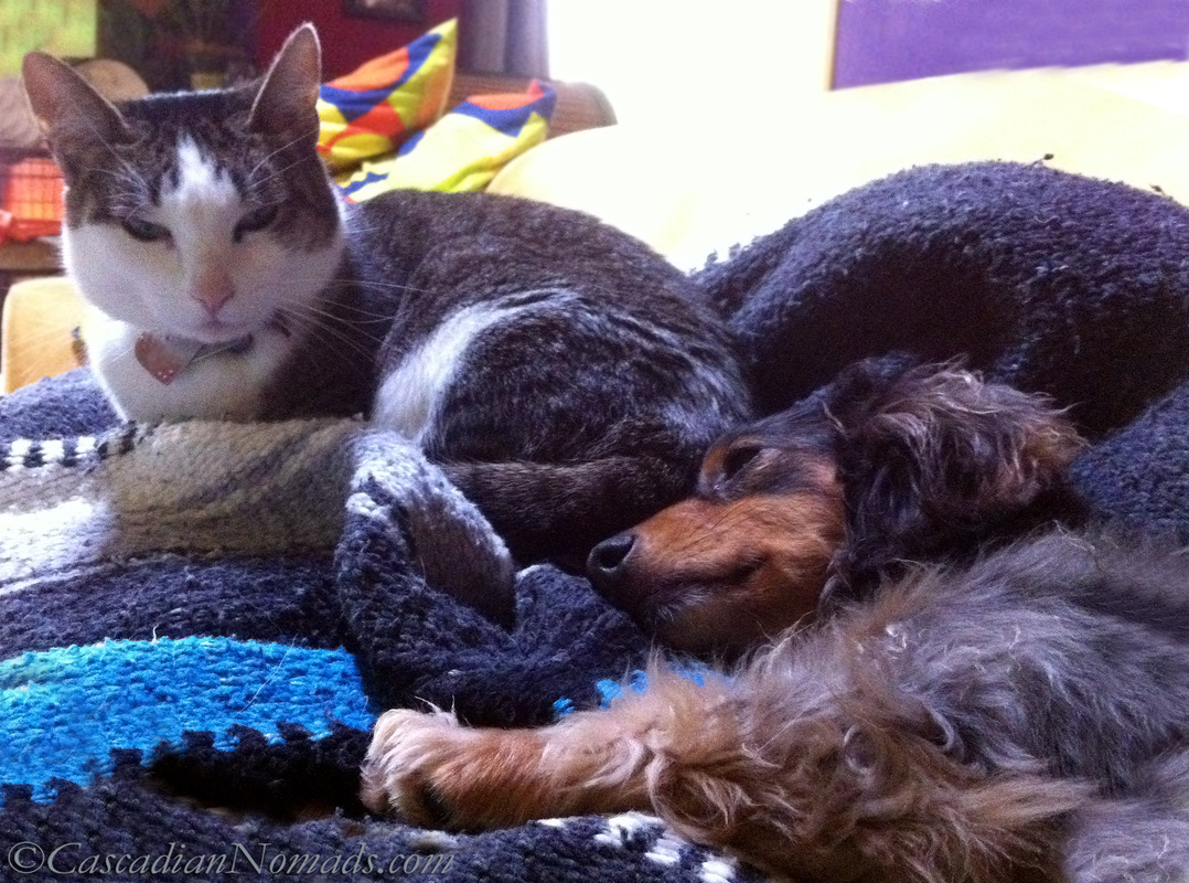 A cat and a dachsund cuddling on the couch: perhaps a human can join them once the vacuuming is done? #NeatoBestPetVacuum