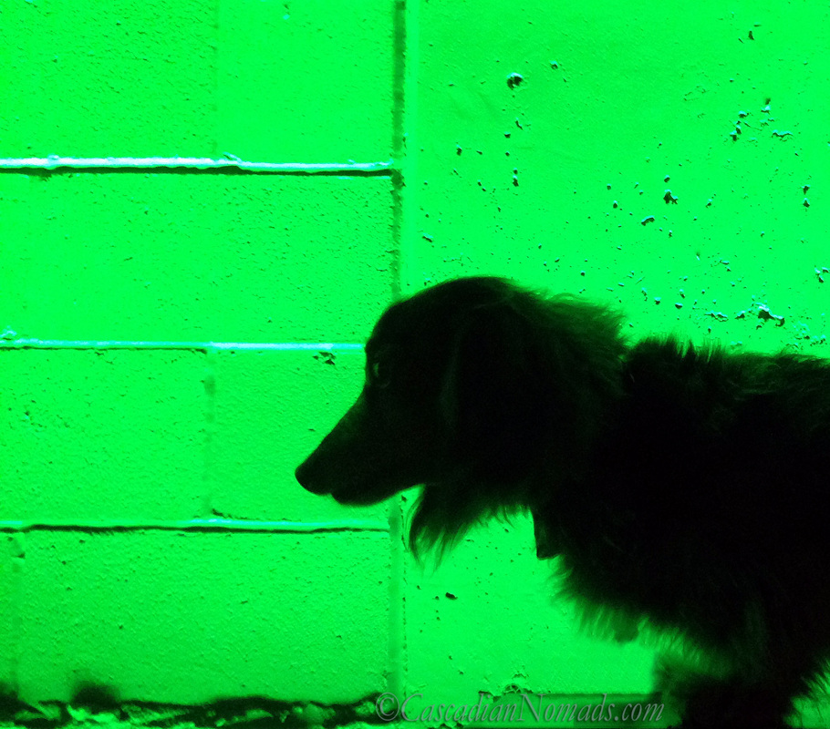 Miniature long-haired dachshund dog silhouette in green, Counterbalance Park, Seattle