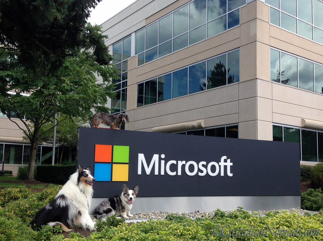 Dogs at the Microsoft Campus, Redmond, Washington: Rough collie Huxley, Cardigan Welsh corgi Brychwyn and miniature dachshund Wilhelm pose for a photo with an enterance sign
