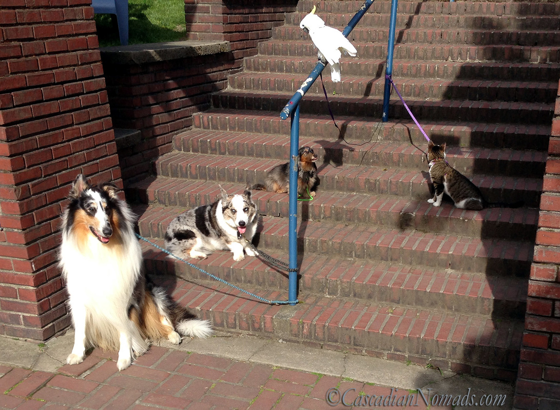 Five Pets on the Steps: Cat Amelia look sup the steps, dachshund Wilhelm looks up at cockatoo Leo, corgi Brychwyn and rough collie Huxley smile.