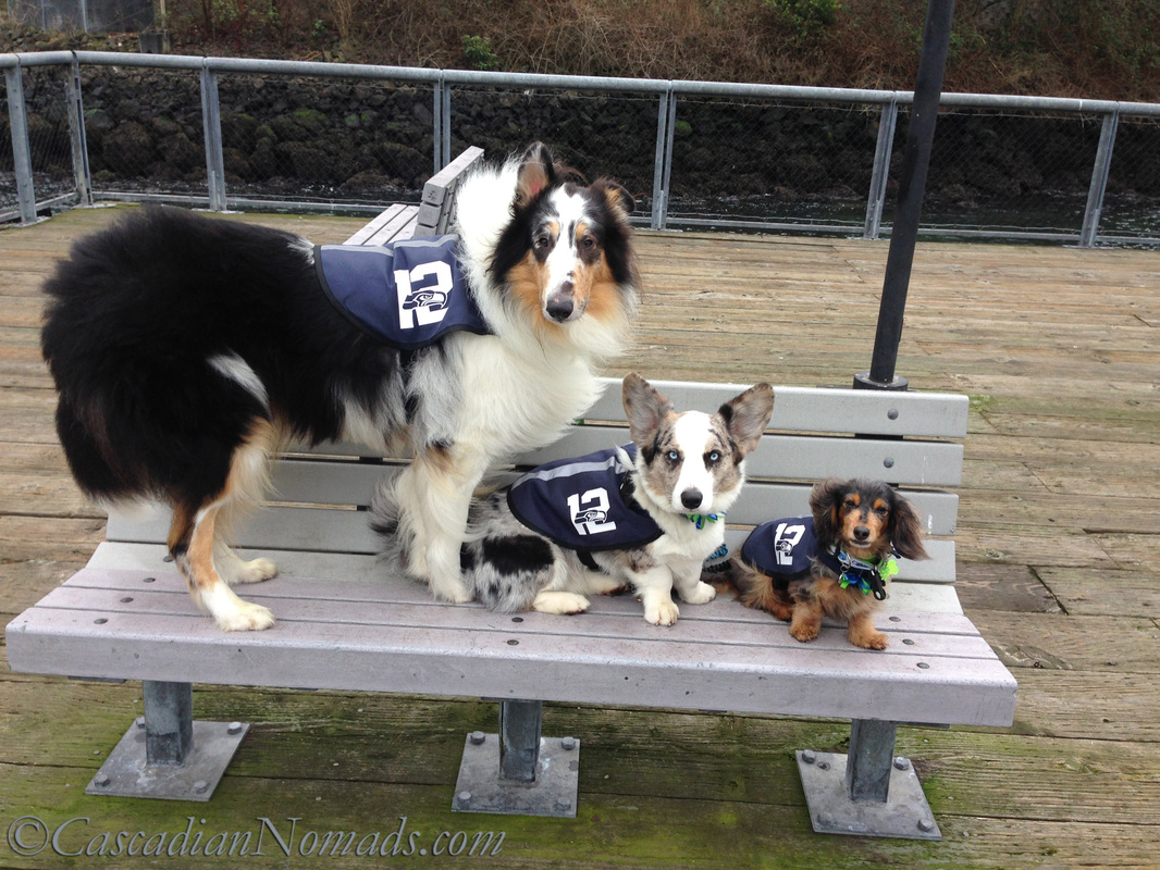The 12th Dogs at Jack Block Park in West Seattle, Cascadia