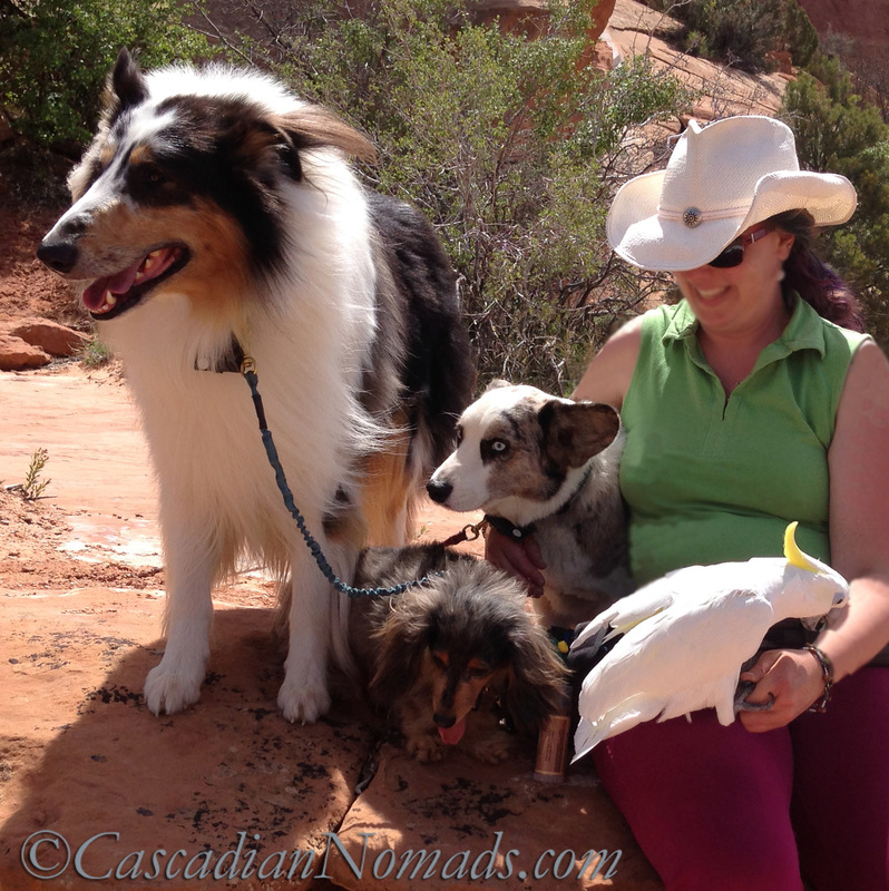 Cascadian Nomads adventurous dogs and parrot with pet and travel blogger, Bethany Clochard.