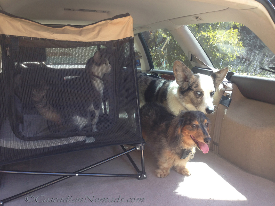 Cat and two dogs in the car.