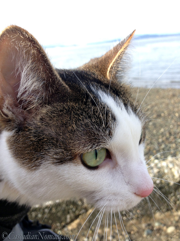 Cat Amelia's selfie from her front pack upon arriving at the beach.