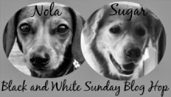 Black & White Sunday Blog Hop Badge