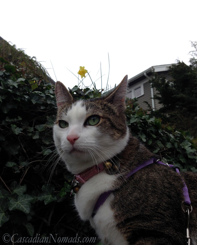 Adventure cat Amelia discovers that her majestic cat selfie has been made silly by a daffy daffodil