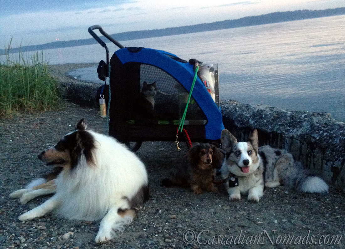 The Cascadian Nomads well trained five pets at Lowman Beach Park, Seattle