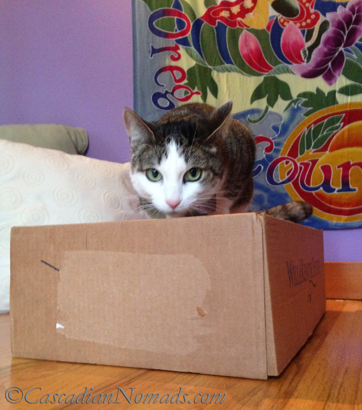 Best Cat Training Tool: A Cardboard Box