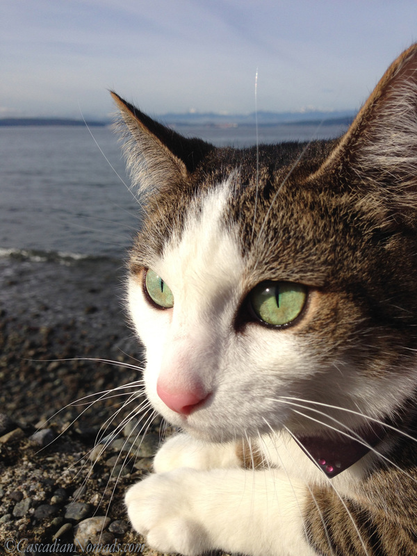 Cat Amelia enjoys the January sunshine and the view at the beach.
