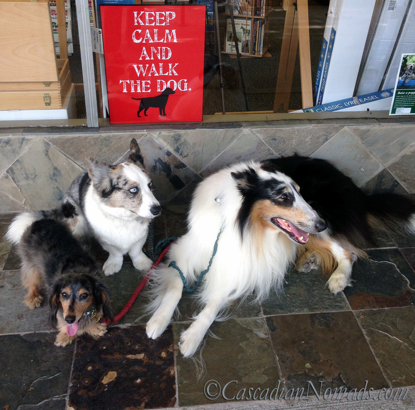 Miniature dachshund dog Wilhelm, Cardigan Welsh corgi dog Brychwyn and rough collie dog Huxley take a #DogWalkingWeek break to pose for an adorable