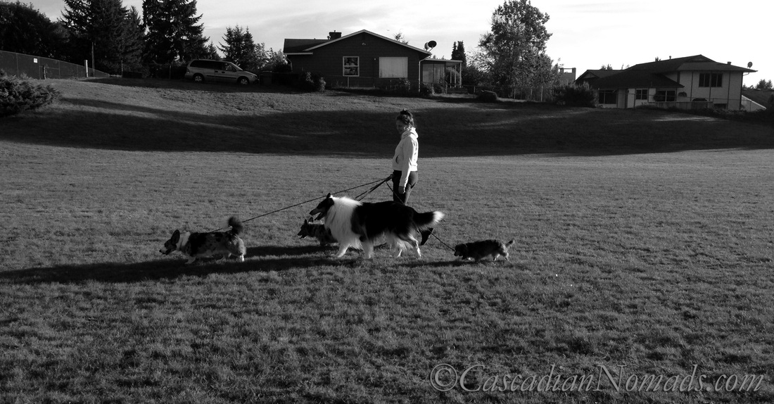 Black & White #DogWalkingWeek photo: four dogs