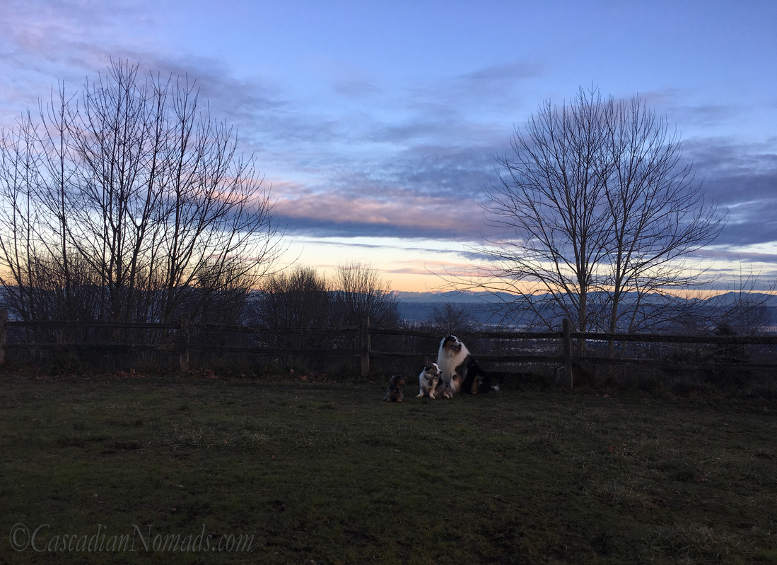 Miniature dachshund Wilhelm, Cardigan Welsh Corgi Brychwyn and rough collie Huxley in front of the Cascade Mountain Range view at dusk, Grandview Off-Leash Dog Park, SeaTac, Washington, Cascadia #DogwoodWeek2