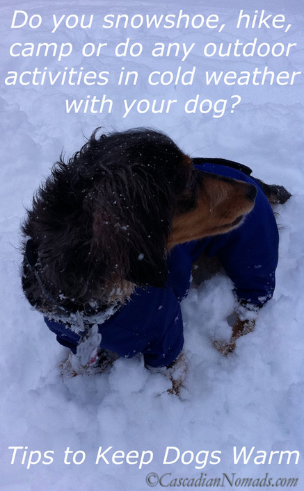 Keeping Dogs Warm During Snowshoeing Camping Or Other Outdoor Activities Cascadian Nomads