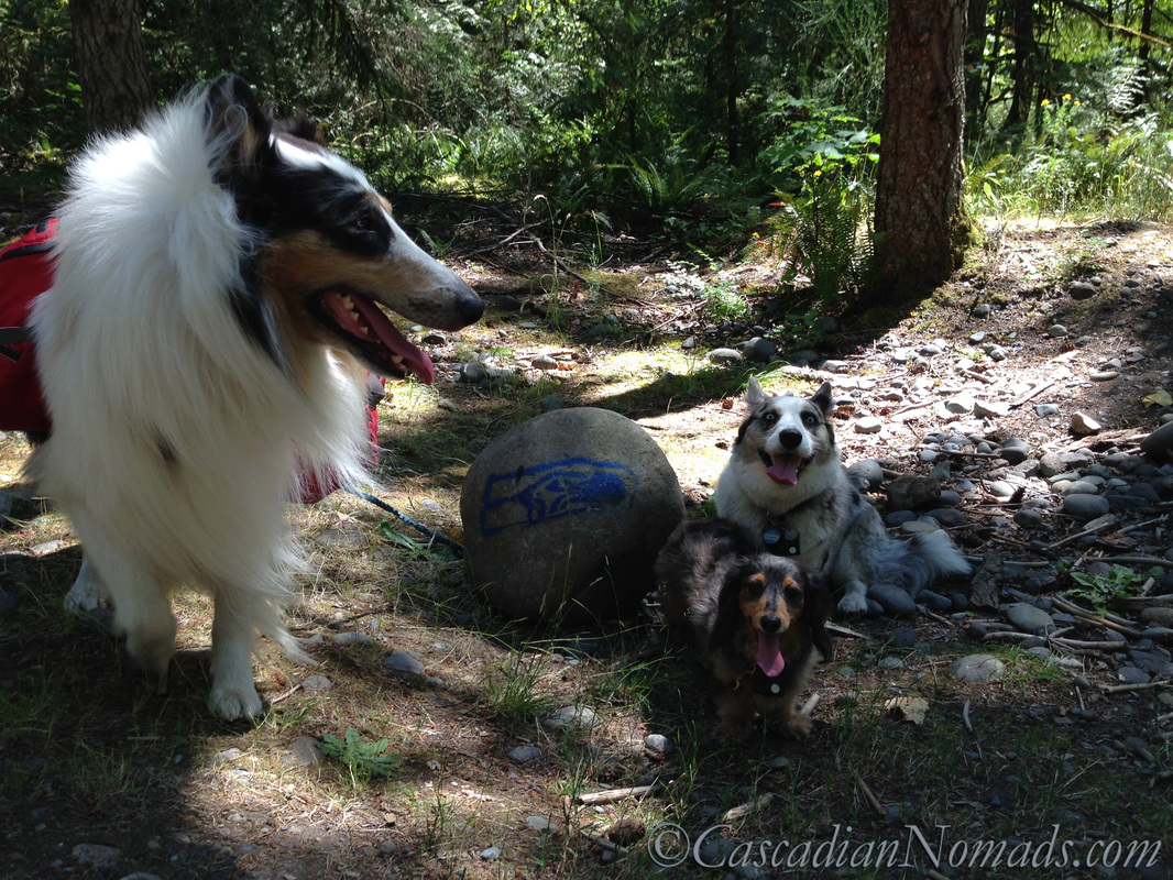 12th Pups Pose with Seahawks Rock, Game Farm Park, Aubirn Washington, Cascadia