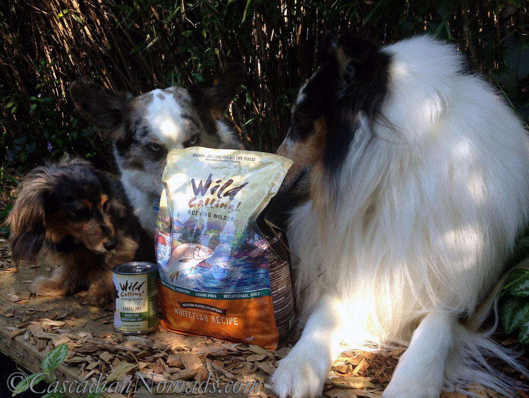Three dogs awaiting a Wild Calling! dog food meal in the great outdoors #TheArtofNutrition