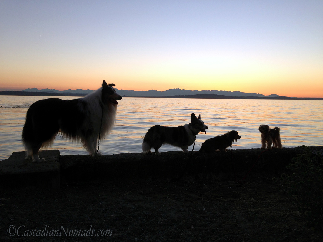 Four dog silhouettes during a colorful Puget Sound sunset