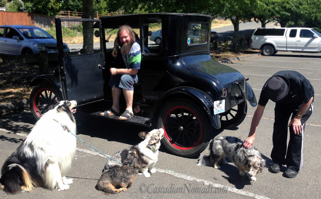 Four dogs greet the Father's after a Model T ride