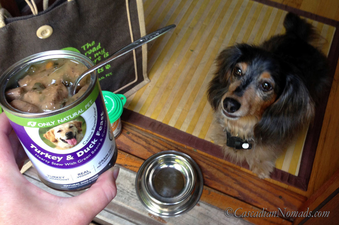 Miniature Dachshund Wilhelm gets ready for a #PawNatural meal of Turkey & Duck PowerStew from Only Natural Pet