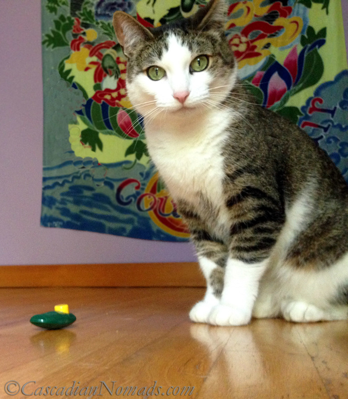 Cat with clicker: Positive Reinforcement Training For Five Pets In Six Steps | #MultiPetMania