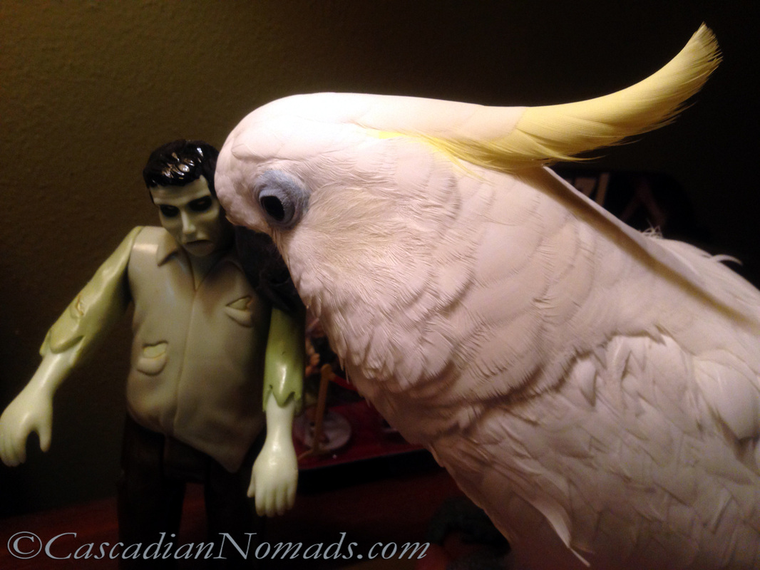 Cockatoo parrot Leo gives a Halloween zombie a