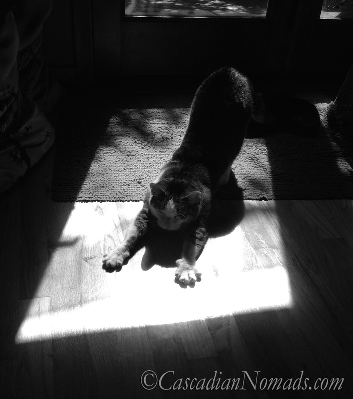 Black & White Photograph of Cat Stretching In Sunshine