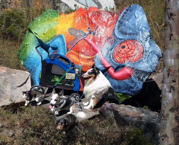 The Cascadian Nomads dogs, cat and cockatoo with a chameleon rock #ReptileCare